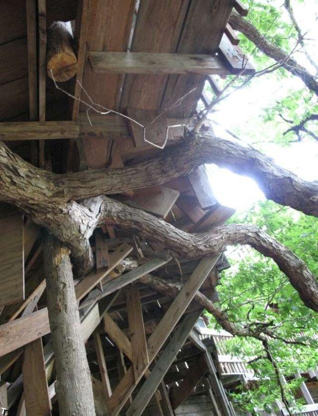 Самый большой в мире дом на дереве (12 фото)