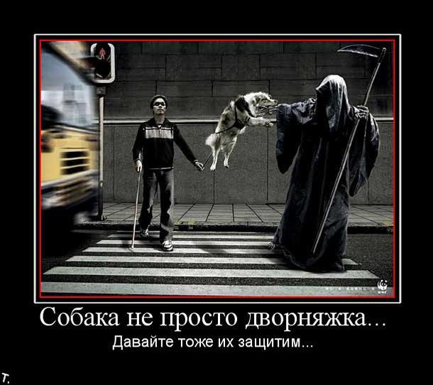 http://trinixy.ru/pics4/20091030/demotivatrori_10.jpg