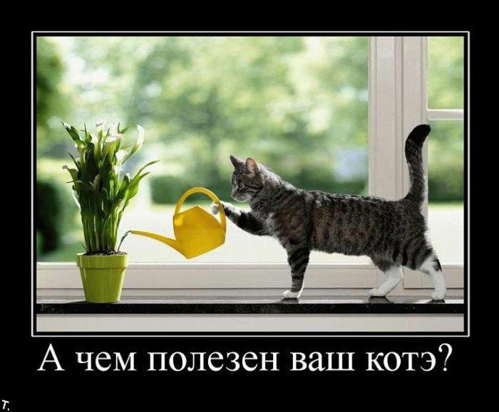 http://trinixy.ru/pics4/20091030/demotivatrori_12.jpg