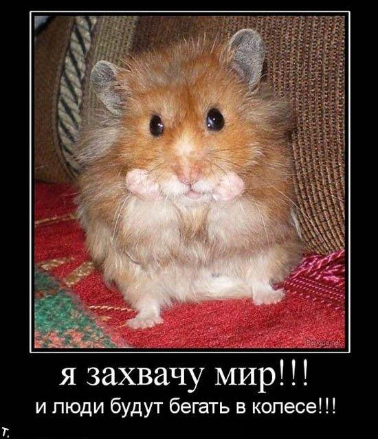 http://trinixy.ru/pics4/20091030/demotivatrori_145.jpg