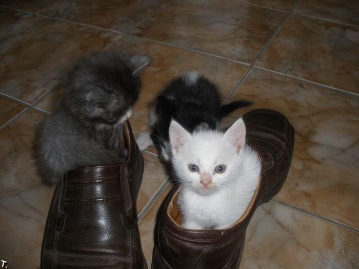 Котята в туфлях (8 фото)