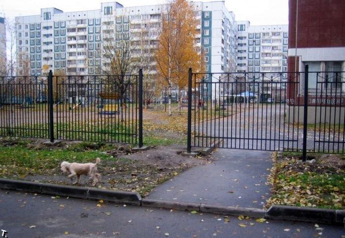 Неудачно забор поставили (3 фото)