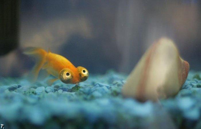 Смешная рыбка (3 фото)