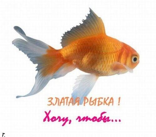 Желания для золотой рыбки (20 фото)