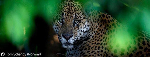 Победители конкурса Wildlife Photographer 2009 (44 фото)