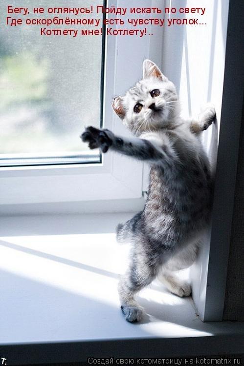 50 лучших котоматриц прошлой недели (50 фото)