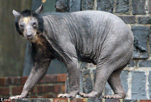 Что это за животное? (4 фото)