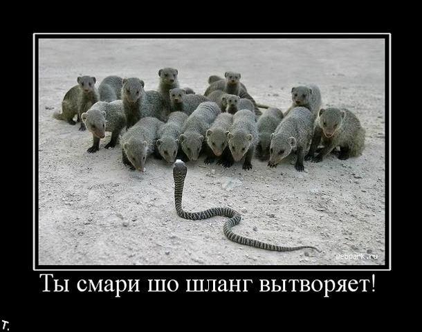 http://trinixy.ru/pics4/20091106/demotivators_nov6_135.jpg