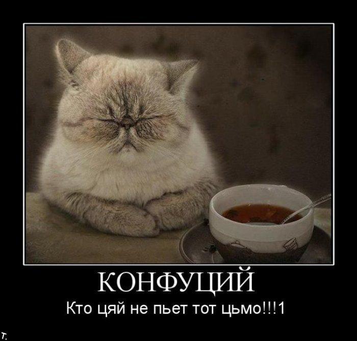 http://trinixy.ru/pics4/20091106/demotivators_nov6_73.jpg