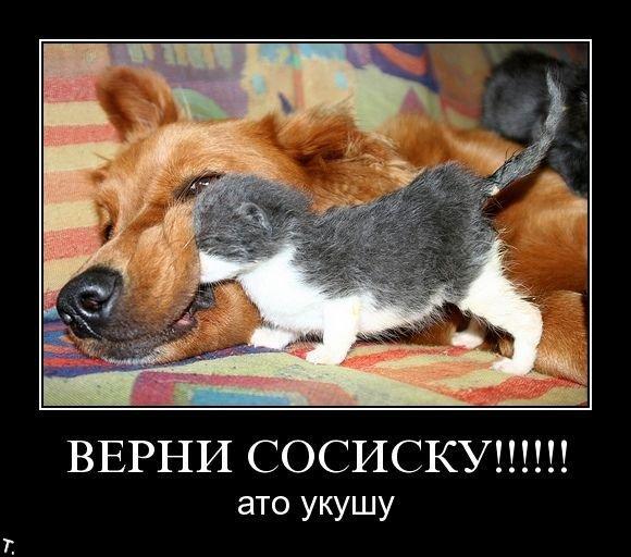 http://trinixy.ru/pics4/20091106/demotivators_nov6_84.jpg