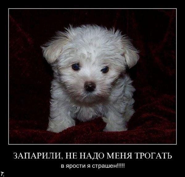 Демотиваторы Demotivators_nov6_88