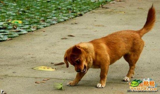 Собака против богомола (4 фото)