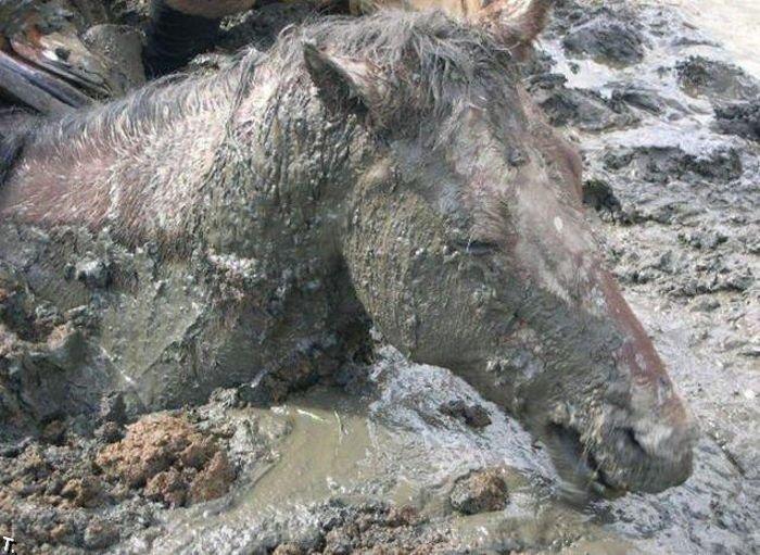 Спасение коня (4 фото)