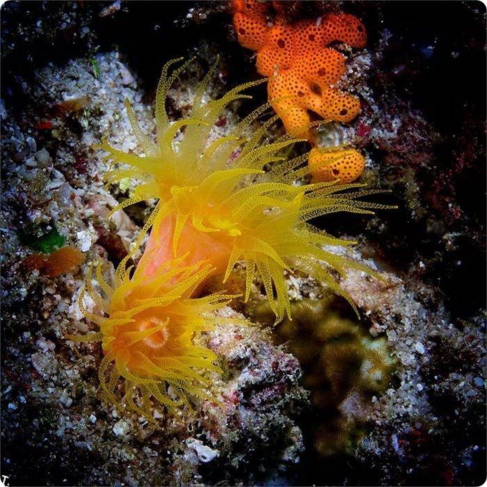 Красивые подводные фотографии (13 фото)