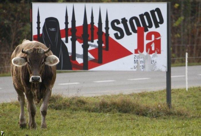 Корова голосует рогами (3 фото)