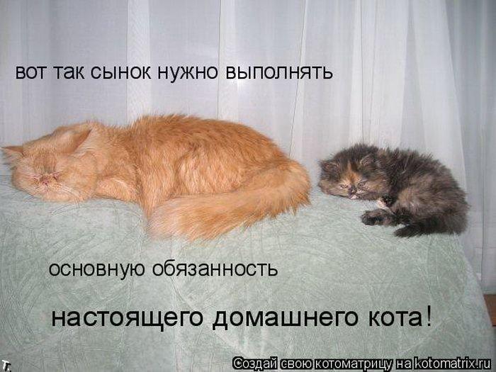 смешные картинки кошек с надписями.