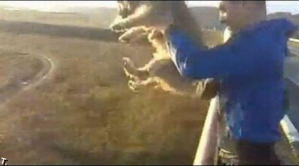 Идиот, сбросивший собаку с моста, арестован (10 фото + видео)
