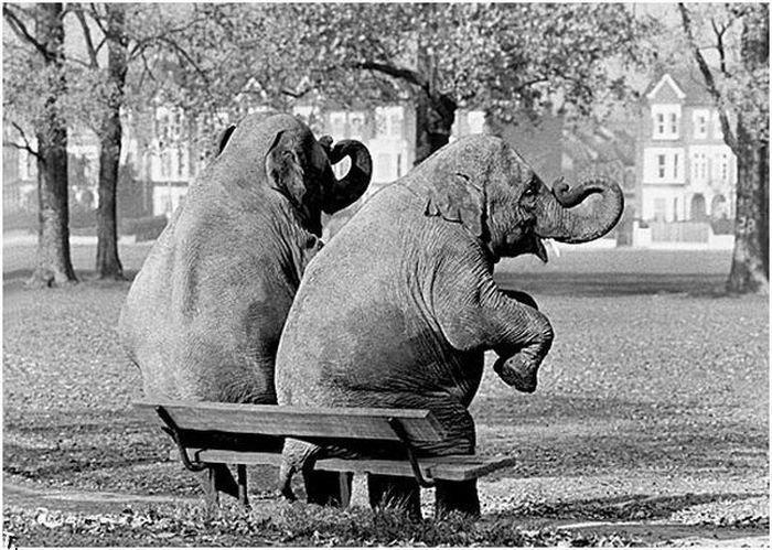 Смешные черно-белые фотографии (20 фото)