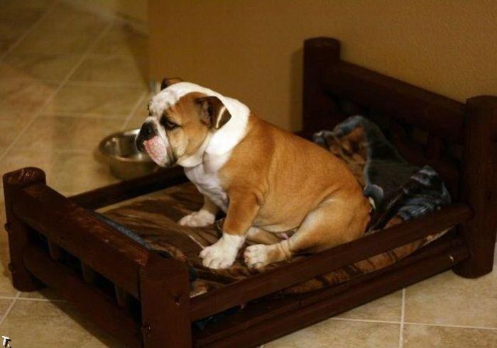 Подарок собаке (5 фото)
