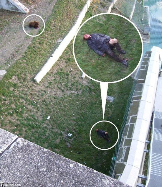 Mедведь против любопытного парня (5 фото)