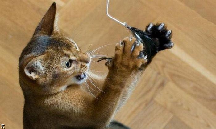 Как развлечь своих котов (12 фото)