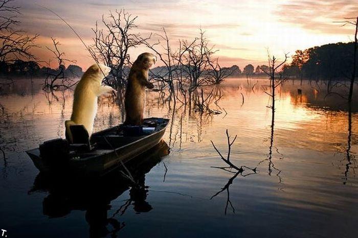 Хорьки на рыбалке (13 фото)