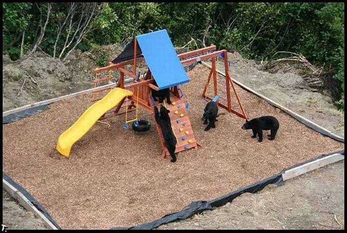 Медведи на детской площадке (4 фото)