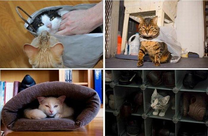 Коты в коробках, сумках, банках и прочих емкостях 01.
