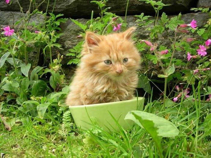 Котов можно найти в любом месте (47 фото)
