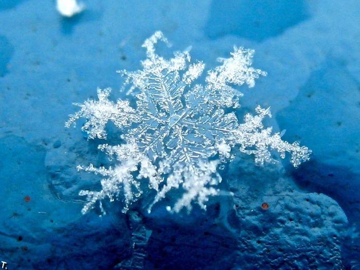 Красивые снежинки (49 фото)