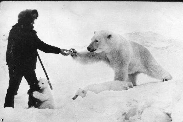 Дружба с белыми медведями (12 фото)