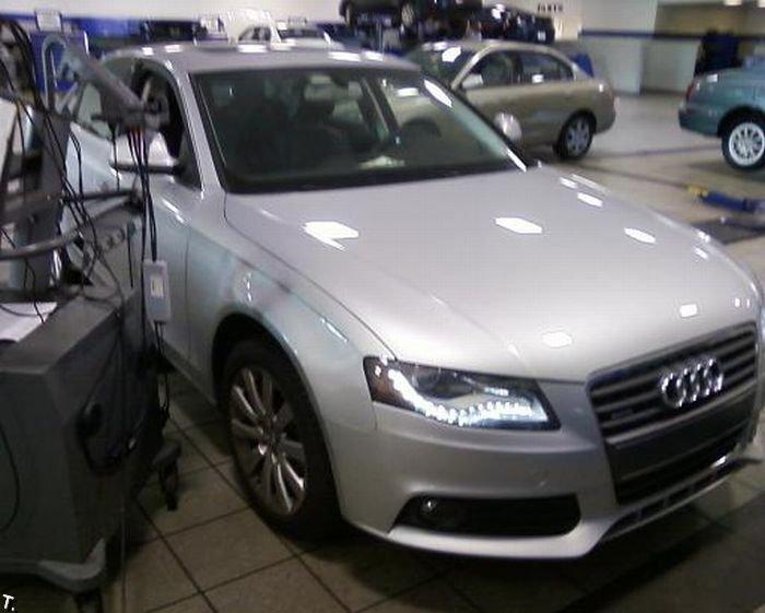 Опоссум под капотом Audi (7 фото)