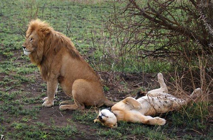 приколы про животных видео секс:
