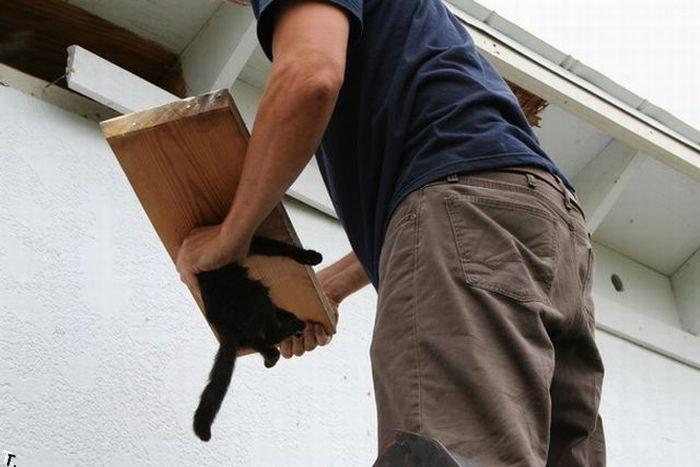 Спасение застрявшего кота (9 фото)