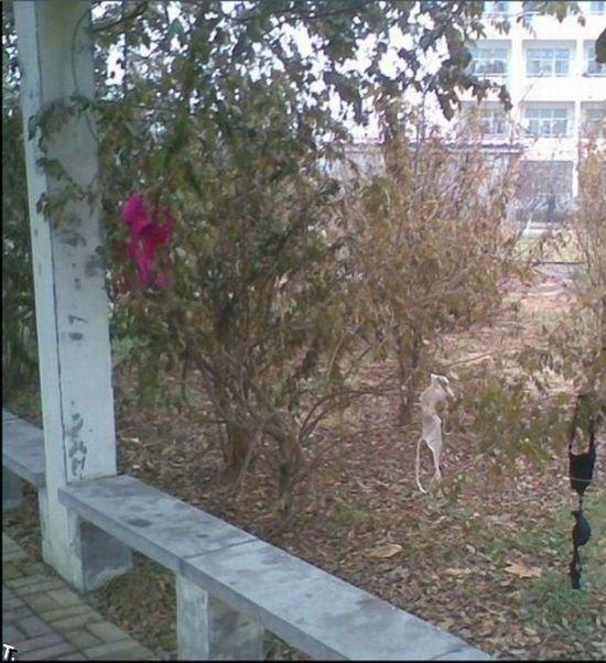 Что можно найти под окнами общаги (6 фото)