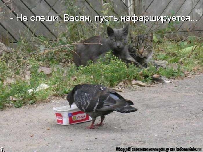 Лучшие котоматрицы прошлой недели (49 фото)