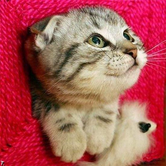 Позитив. Классный котенок )) (13 фото)