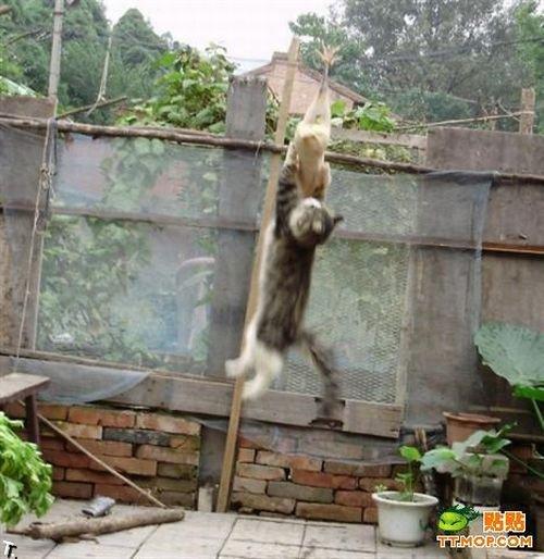 hungry_cat_08.jpg