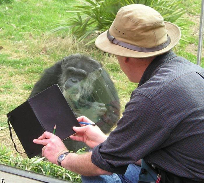 Портреты обезьян (5 фото)