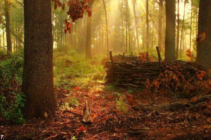 Красивые леса (22 фото)