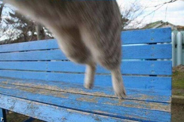 Когда нападают кошки... (3 фото)