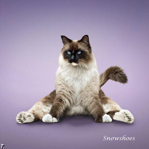 http://de.trinixy.ru/pics4/20091222/yoga_cats_2010_13.jpg