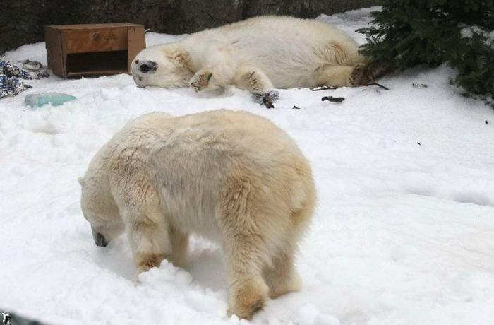 Как развлекают медведей в зоопарке Сан Франциско (4 фото)