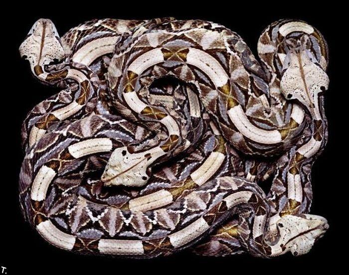 Креатив из змей (26 фото)
