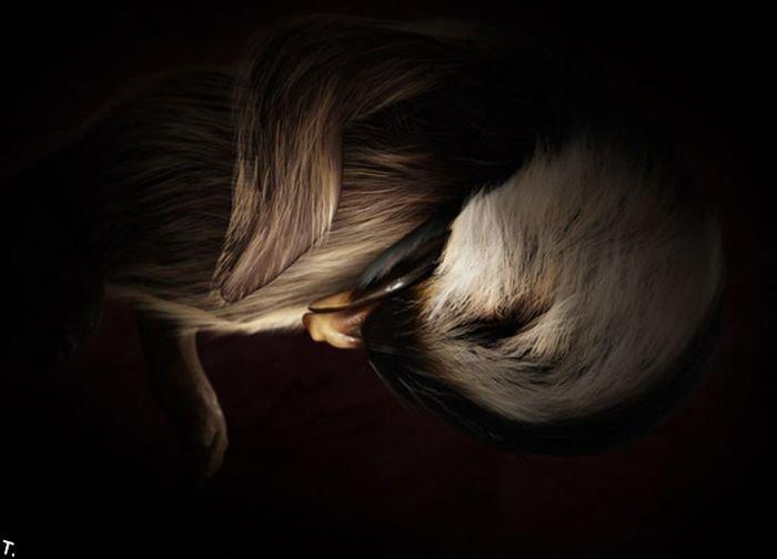 Животные в утробе матери (15 фото)