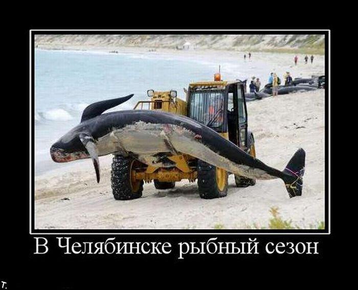 http://ru.trinixy.ru/pics4/20091225/demotiavatori_66.jpg