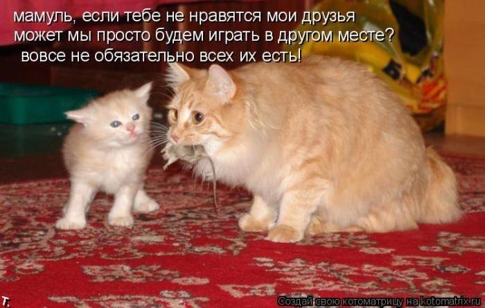Котоматриця!)))) - Страница 2 Kotomatrix_08