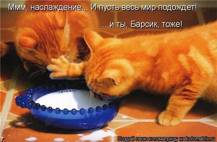 Котоматриця!)))) - Страница 2 Kotomatrix_09