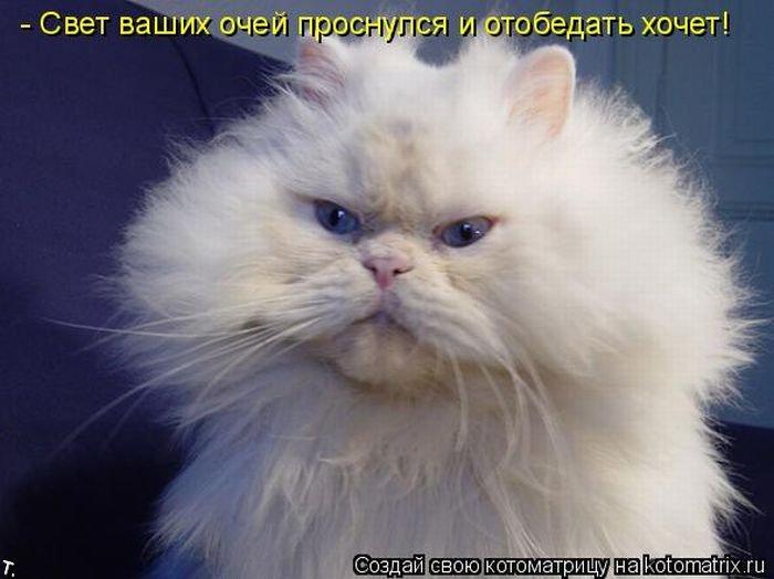 Котоматриця!)))) - Страница 2 Kotomatrix_12