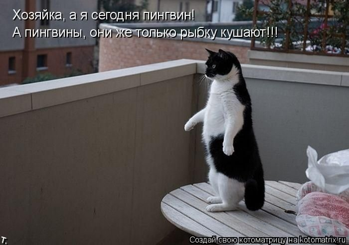 Котоматриця!)))) - Страница 2 Kotomatrix_24
